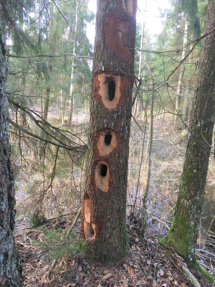 """Negyvas medis – daugybės gyvų organizmų namai ir maisto šaltinis.<br>""""Darnūs miškai"""" nuotr."""