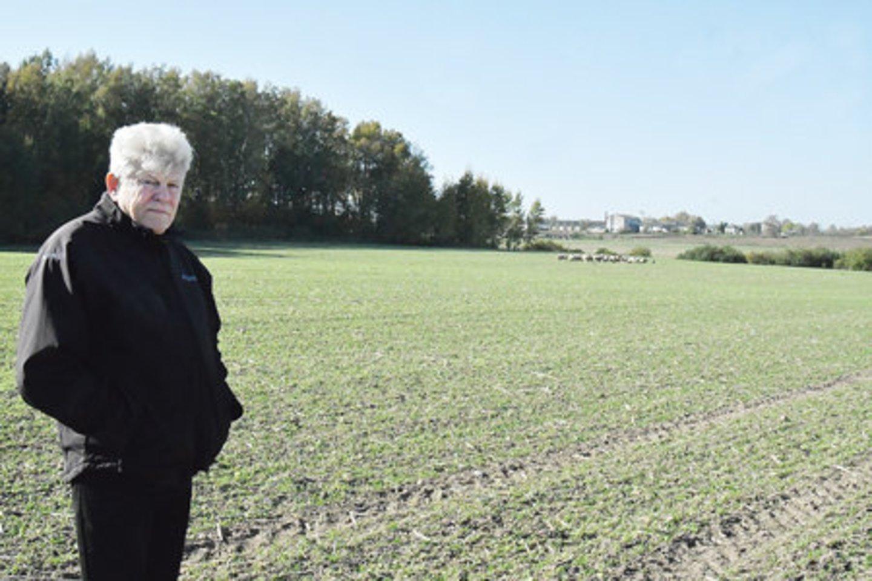 """Ūkininkas Stasys Sandaras (nuotr.) susiskaičiavo, kad Edmundo Petrošiaus avys gali būti nuniokojusios mažiausiai 30–40 proc. jo kviečių derliaus.<br>""""Pajūrio naujienos"""""""