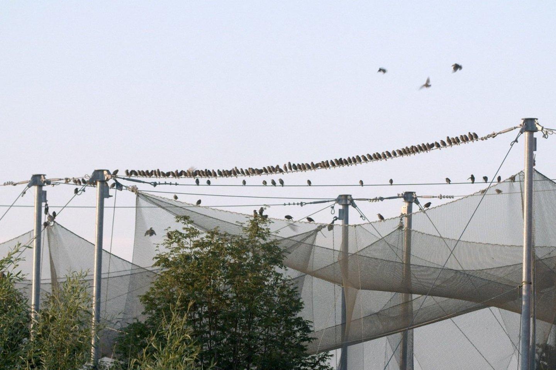 """""""Pasienio paukščiai"""".<br>Rengėjų nuotr."""