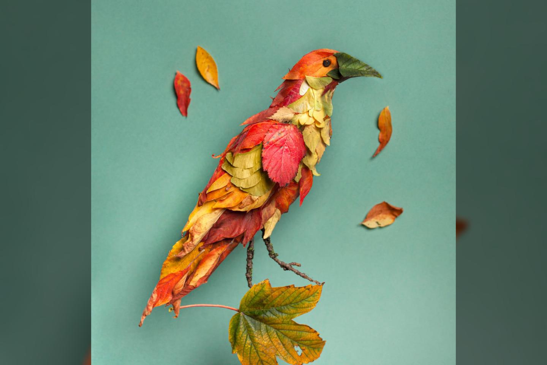 Paukštis.<br>Asmeninio archyvo nuotr.