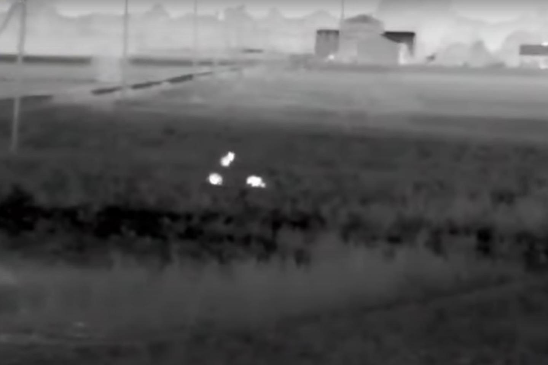Ūkininkai 600 avių priversti kas vakarą suvaryti į tvartą.<br>Stop kadras iš R.Lukoševičiūtės vaizdo įrašo.